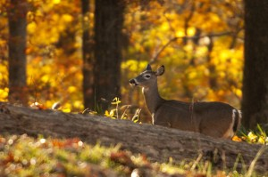 Deer Fencing Bucks County PA
