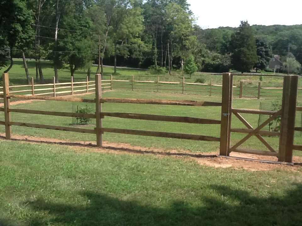 Effective Deer Repellant Install Deer Fence Bucks