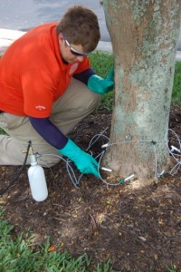 Emerald Ash Borer in Bucks County